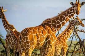 masai mara np